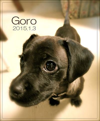 goro1000 のコピー