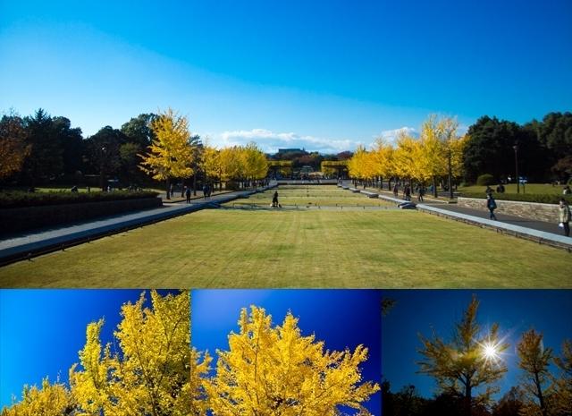 昭和記念公園 (15)