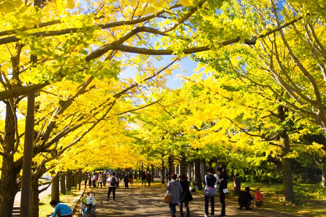 昭和記念公園 (19)