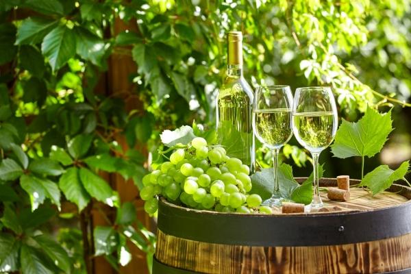 8月30日ワイン