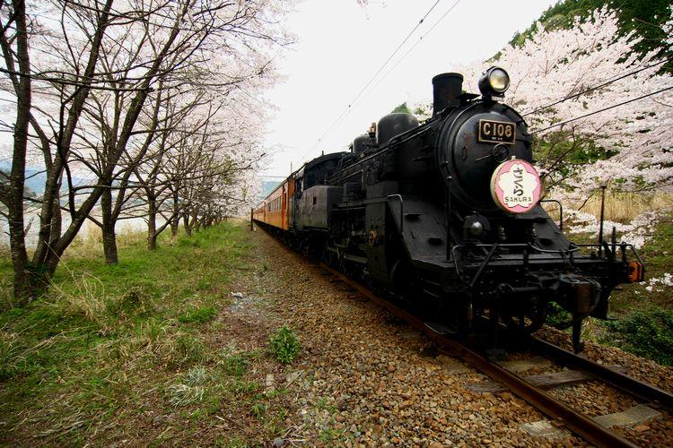 1604大井川鉄道③1D (148)fc2