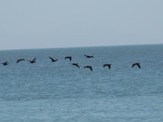 水鳥01 (5)