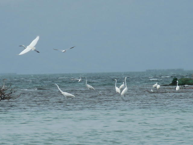 水鳥01 (6)