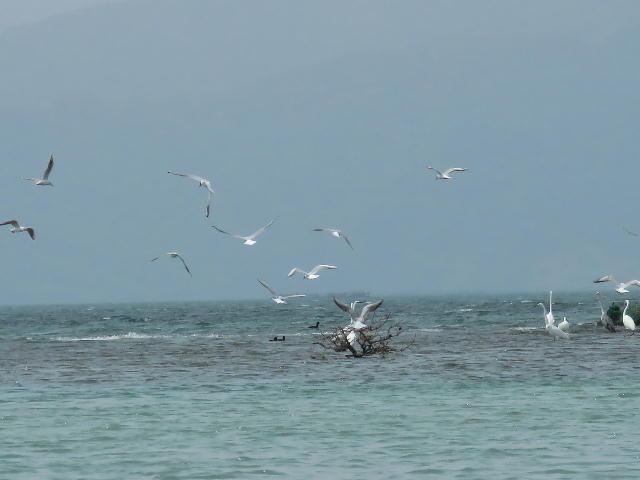 水鳥01 (10)