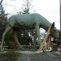 滋賀立木神社鹿