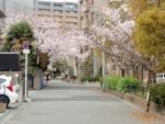 長興寺公園桜 (1)