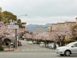 新千里北桜