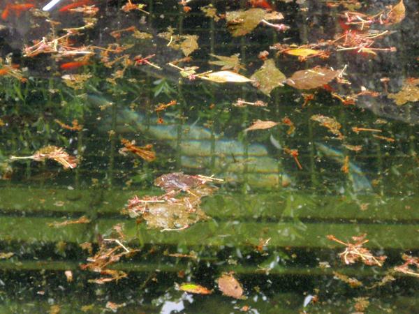 弁慶の泉 (8)