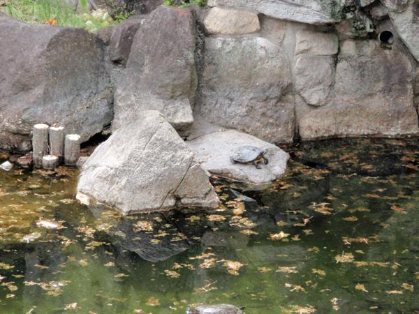 弁慶の泉 (7)