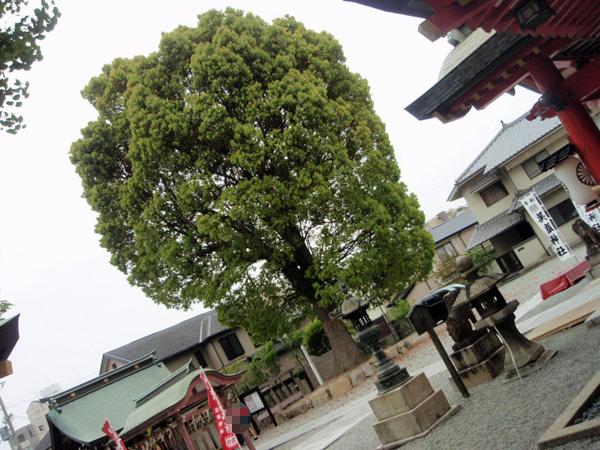 呉服神社 (12)