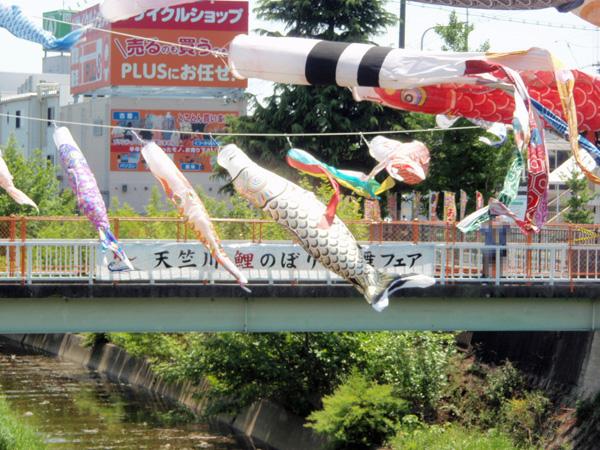 天竺川鯉のぼり 風舞フェア (2)