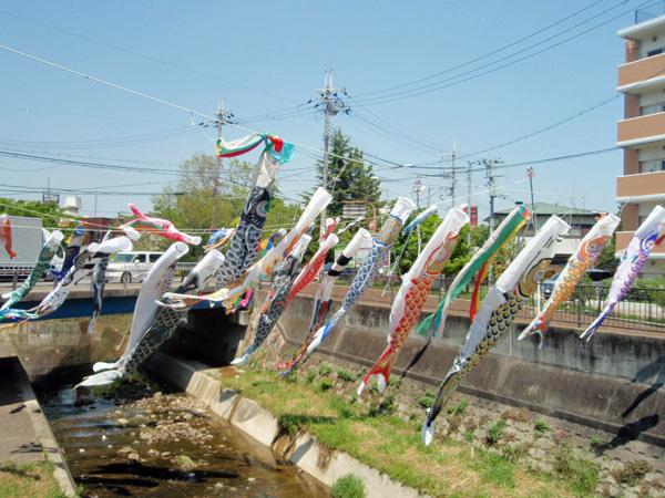 天竺川鯉のぼり 風舞フェア (3)