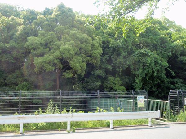 猪名川風致公園 (3)