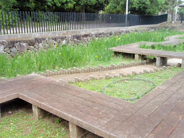 赤坂上池公園 菖蒲園 (2)