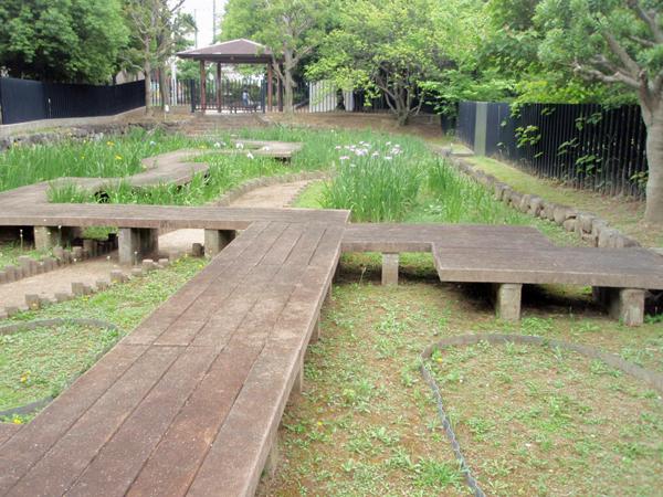 赤坂上池公園 菖蒲園 (1)