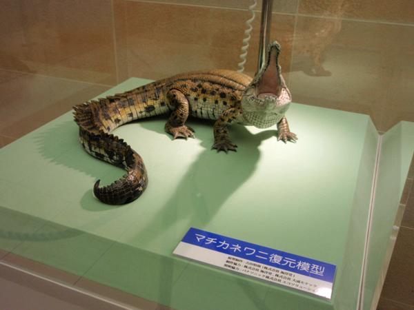 大阪大学総合学術博物館 (10)