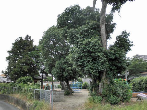 粟生間谷東 春日神社 (4)