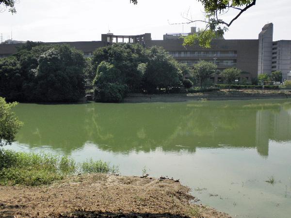 うずわ池 亀 (2)