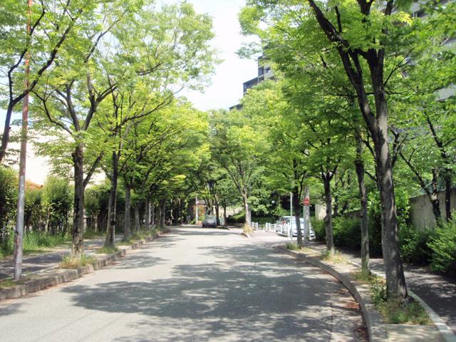 千里中央パーク・ヒルズ ケヤキ並木 (3)