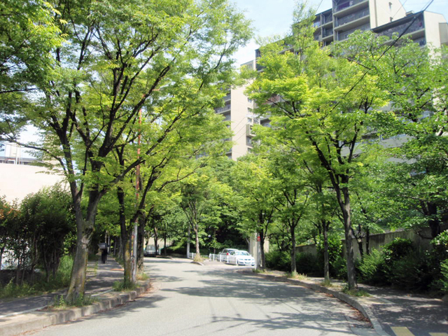千里中央パーク・ヒルズ ケヤキ並木 (2)