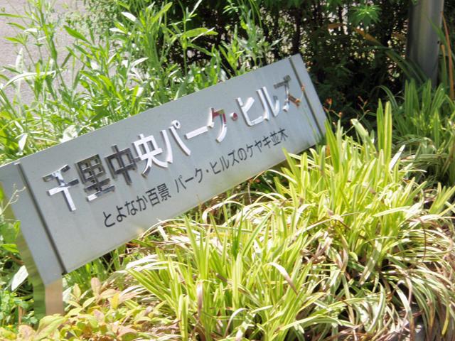 千里中央パーク・ヒルズ ケヤキ並木 (1)