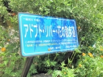 昭和橋 アドプト (7)