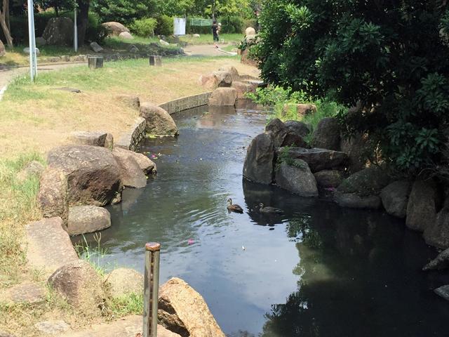 久保公園 夏 (1)