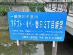 千里川 神鞍橋 (7)