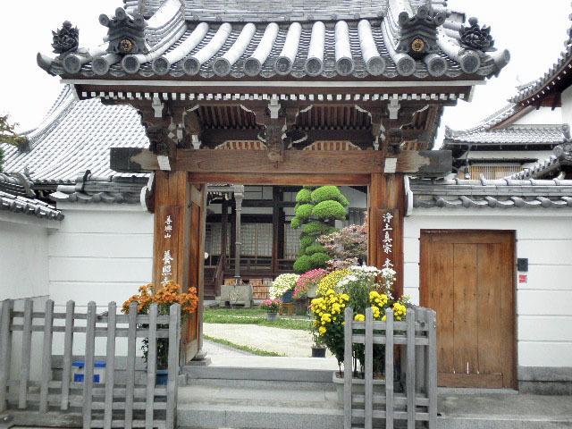 養照寺 菊華展1611 (2)