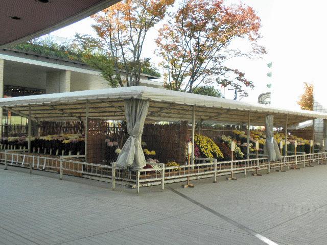 菊花展1611
