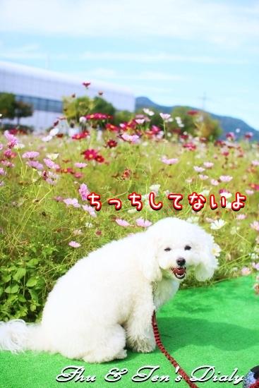 004IMG_8318.jpg