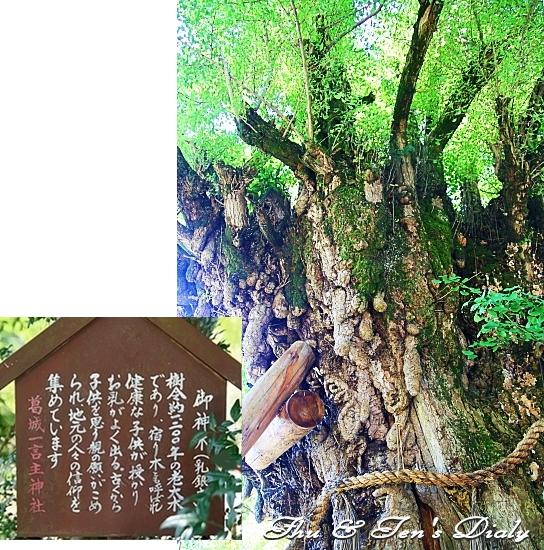 006IMG_7984.jpg