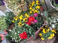 出発前に枯れ花摘み