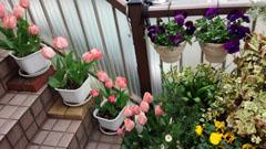 春の外階段1