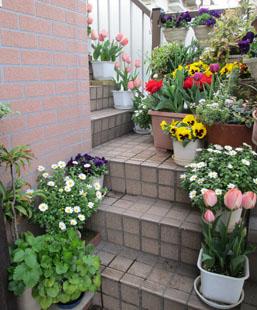 春の外階段5