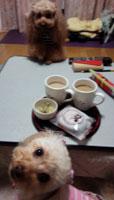 帰ったよ~のお茶2