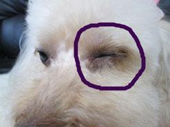 Non 目の傷2