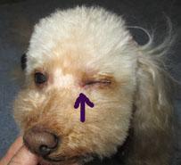 Non 目の傷1