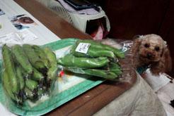 空豆剥き剥き2