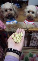 ピーチベリー収穫 食べる?