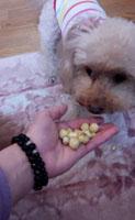 ピーチベリー収穫 食べる?5