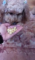 ピーチベリー収穫 食べる?6