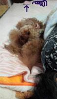 母昼寝タイム1