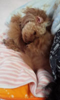 母昼寝タイム2
