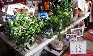 所狭しの植木