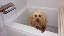 Rも初風呂