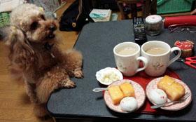 お茶したのです