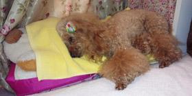 視線の端の寝犬