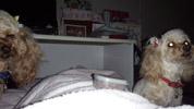 寝る時の座り込み2