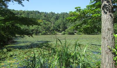極楽寺 蛇の池